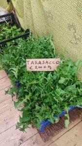 Tarassaco spesa km 0 Orzinuovi Brescia