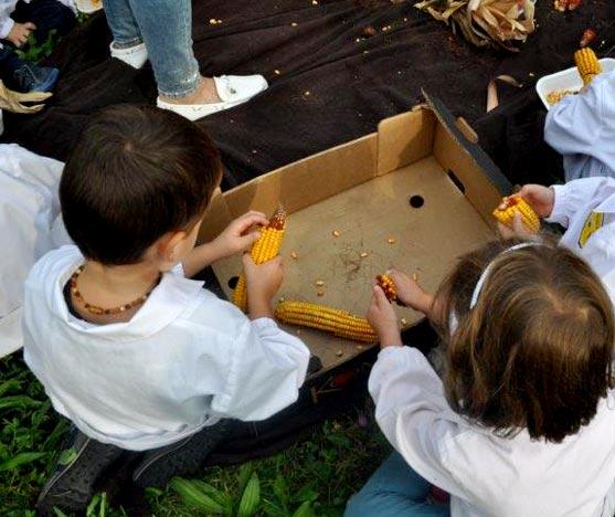 Percorso didattico per bambini raccolta di granoturco